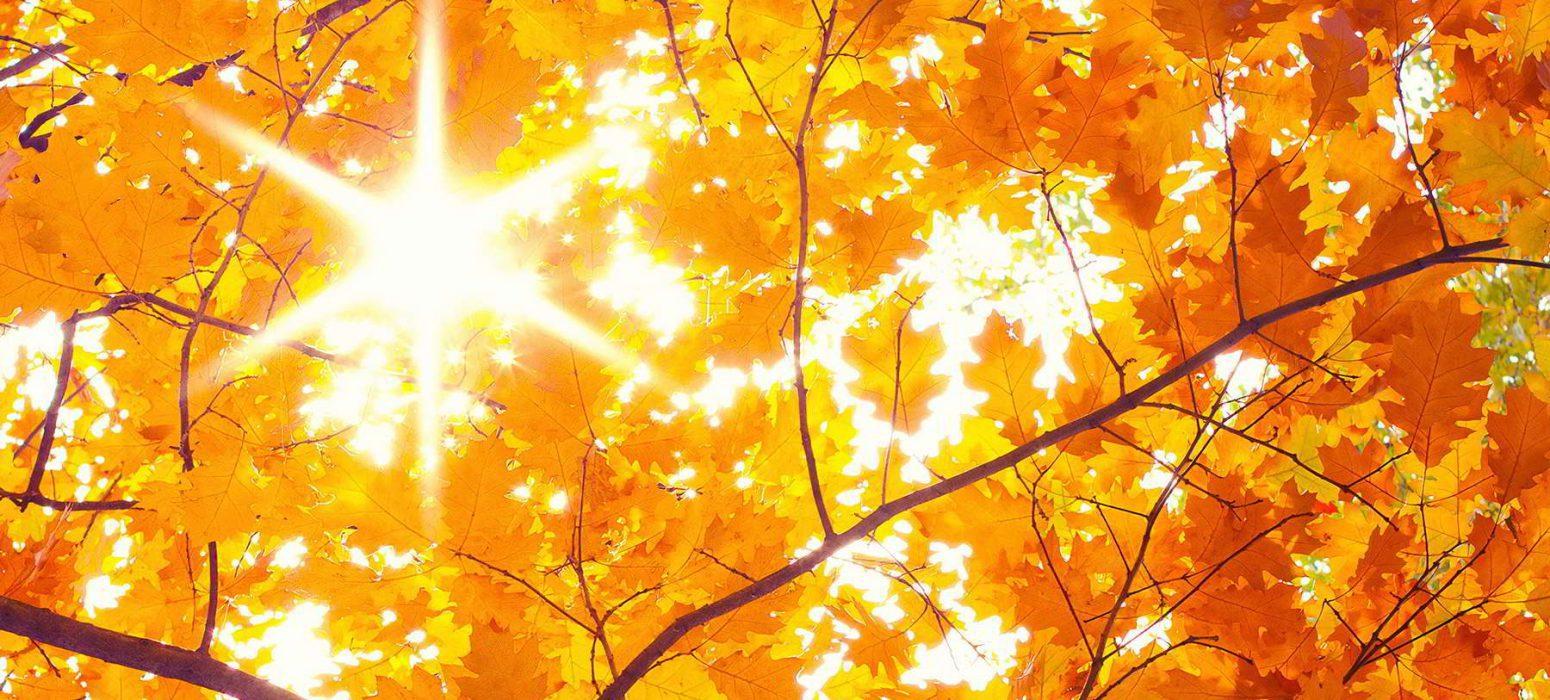 Herbst bg